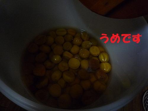 11_20110629165715.jpg