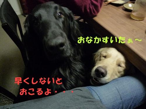 12_20110208164501.jpg