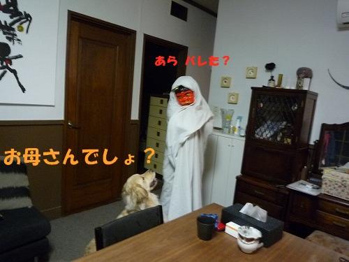 13_20110208164512.jpg