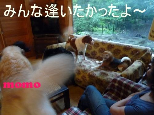 4_20110802162431.jpg