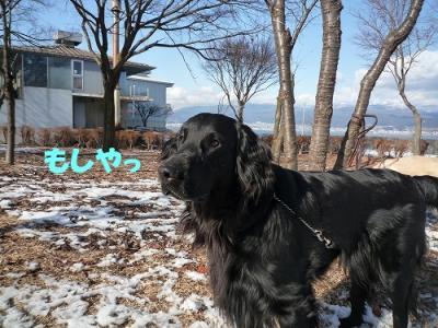 9_20100325185138.jpg