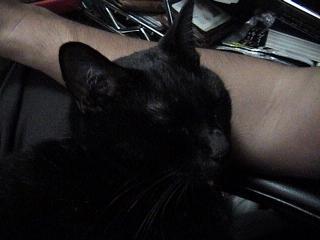 猫2008年8月30日2