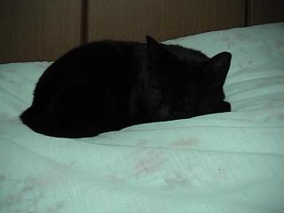 猫2008年9月13日1