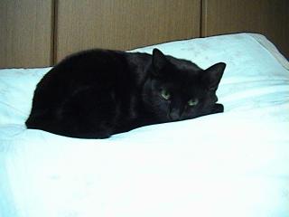 猫2008年9月13日2