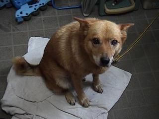 犬2008年8月30日2