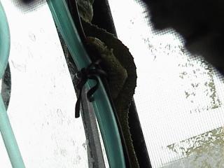 ルディスカメレオン2008年9月6日4