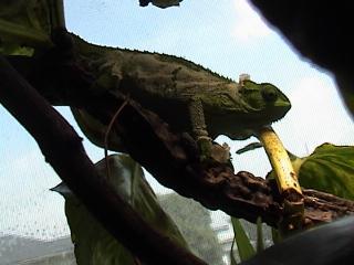 ルディスカメレオン2008年9月23日1