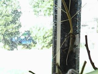 ルディス・ベビー2008年9月3日30
