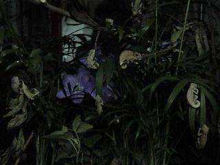 ルディス・ベビー2008年9月13日夜1