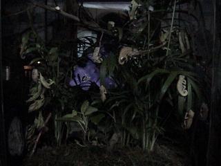 ルディス・ベビー2008年9月13日夜2