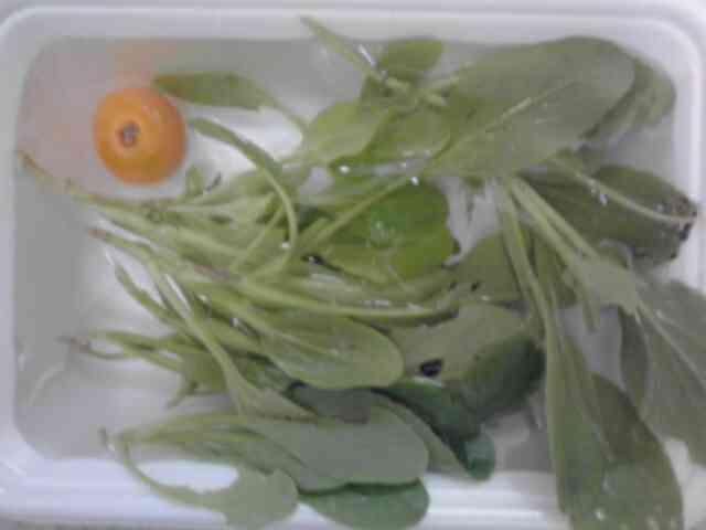 090813 チンゲン菜まびき1