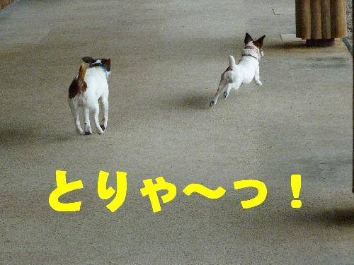 とりゃ~っ!