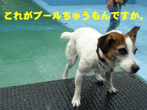 これがプールちゅうもんですか。