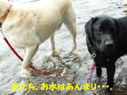 あたち、お水はあんまり・・・。