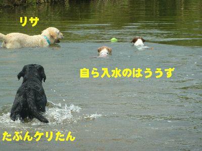 泳ぐはううず