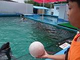 イルカとキャッチボール