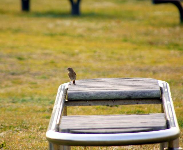 鳥さん0173-s