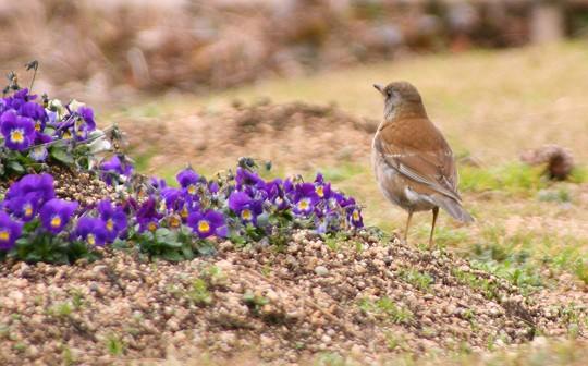 鳥さん0259-s