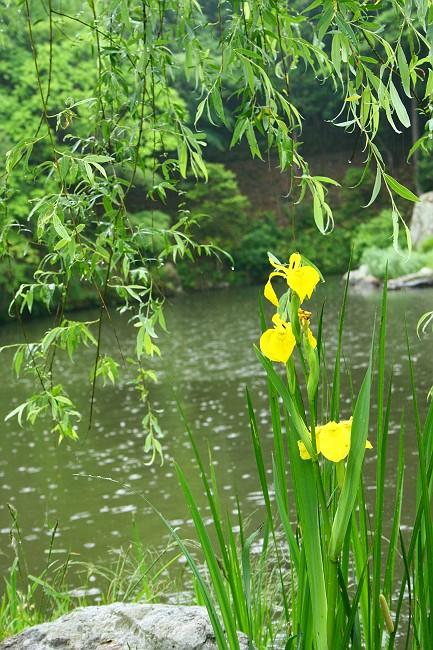 雨の曹源寺0667-s