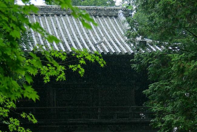 雨の曹源寺0672-s