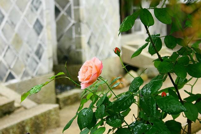雨の曹源寺0674-s