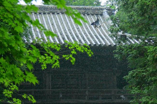 雨の曹源寺0673-s