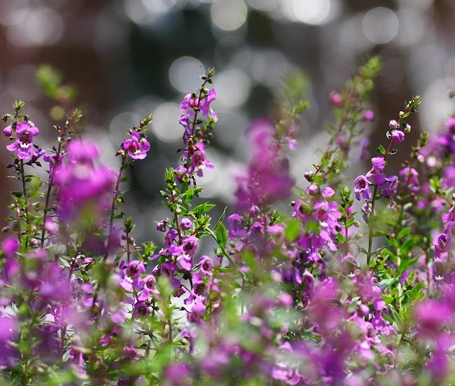 紫の花0764-s
