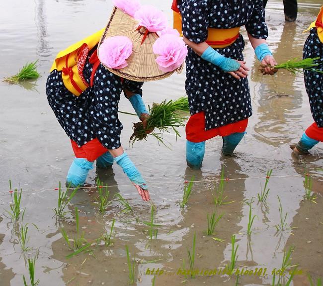 お田植え祭0797-s