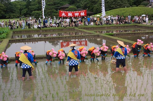 お田植え祭0799-s