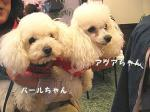パールちゃん&アクアちゃん