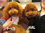 トゥユ&HAL