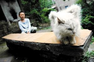 我靠一看就是迷信?的地方 这么可爱的小猫万一一天就拟人化然后X了你家孙子(你在说什么啊!自重喂!