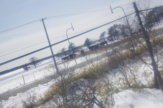 2011031156.jpg