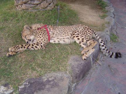 safari5.jpg