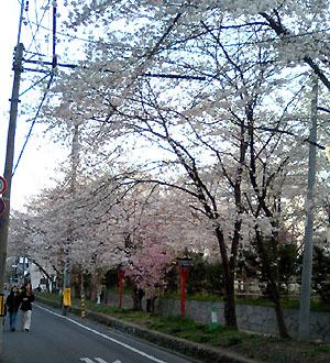 sakura_hirano.jpg