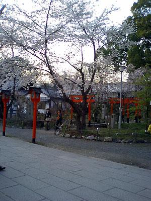 sakura_hirano3.jpg