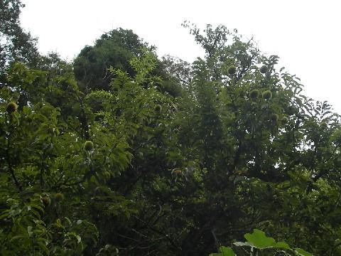 MGP3446.jpg