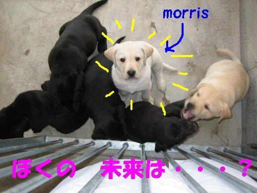 モーリス_017.-small