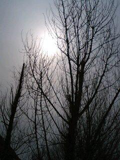 20080303092007.jpg