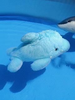 イルカちゃんも泳ぎます。