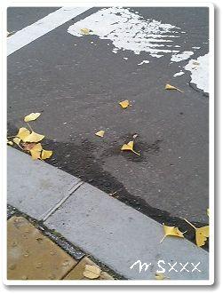 落ちた、秋。