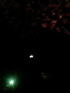 ピンボケな夜桜と月。