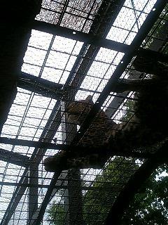 豹…ですか?