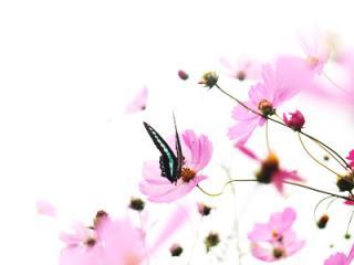 蝶々が好き。