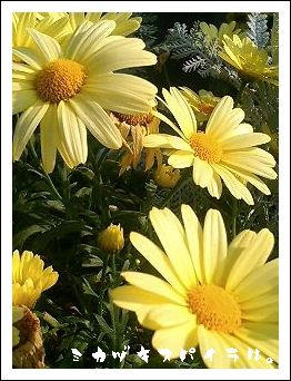 黄色、綺麗。
