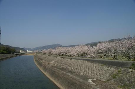 α-SweetD+16-80ZEISS 土手の桜並木
