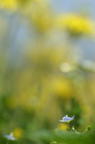 7D+AF100mmMACRO たんぽぽ林の瞳ちゃん