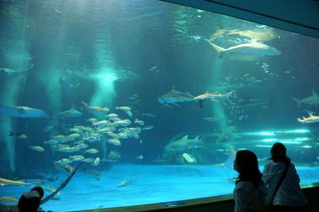 α-SweetD+16-80ZEISS サメの大水槽