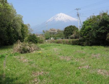 畑からの富士山