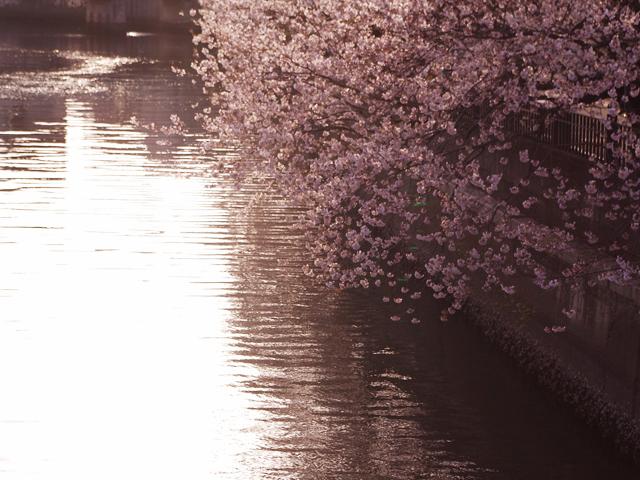 20100403_02.jpg